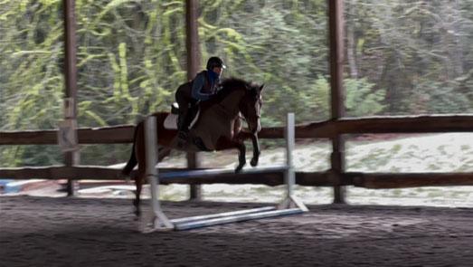 sebastion horse for sale